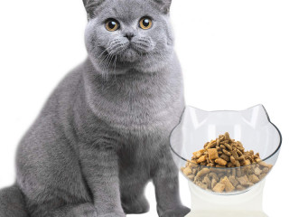 Cat bowl for your pet